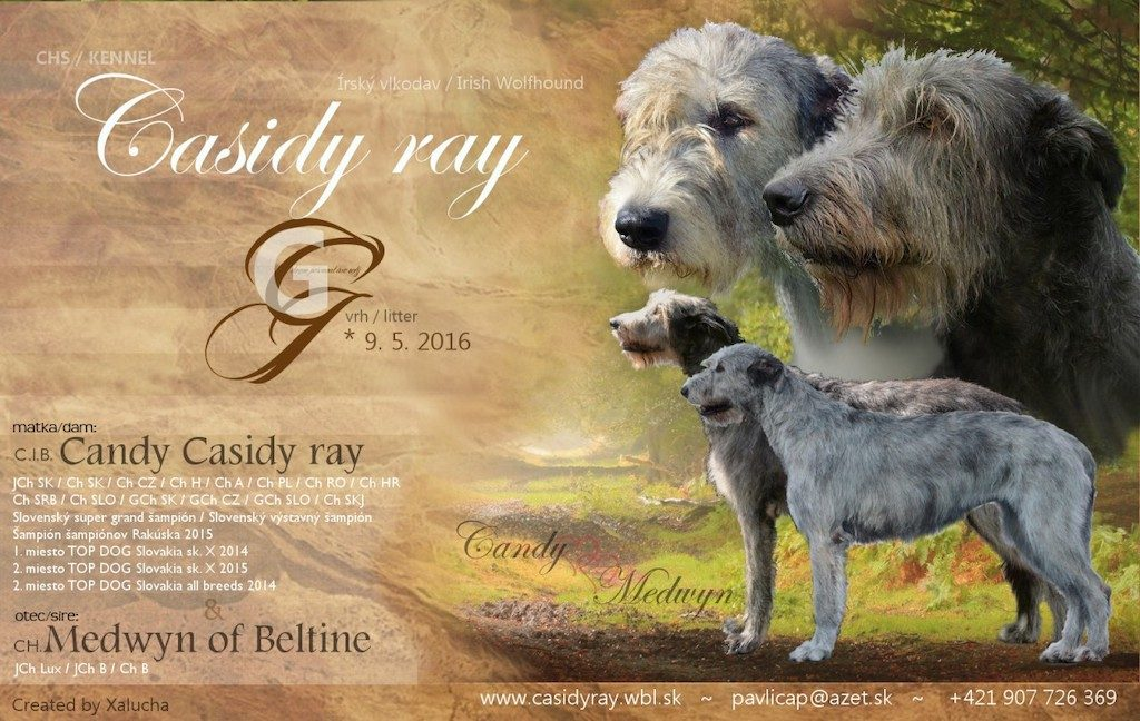 vr G casidy ray2016